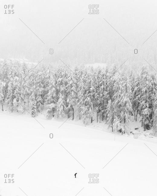 Skiing in falling snow