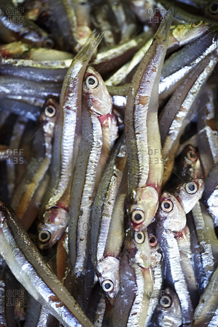 Close-up of fresh wild anchovies