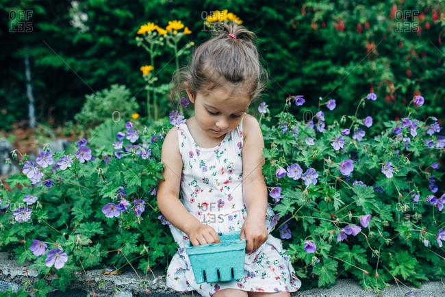 Little girl in garden with container of raspberries