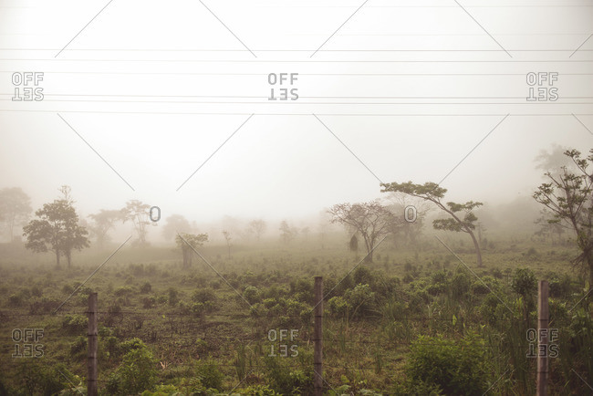 A foggy field in Guatemala