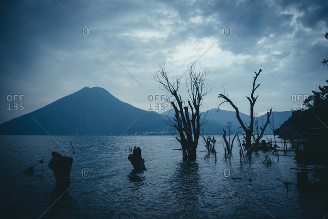 Tree stumps in Lago Atitlan, Guatemala