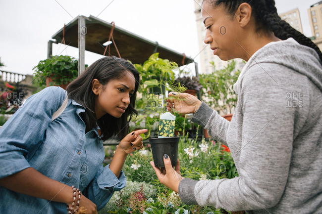 Two women pick out a plant at a garden store