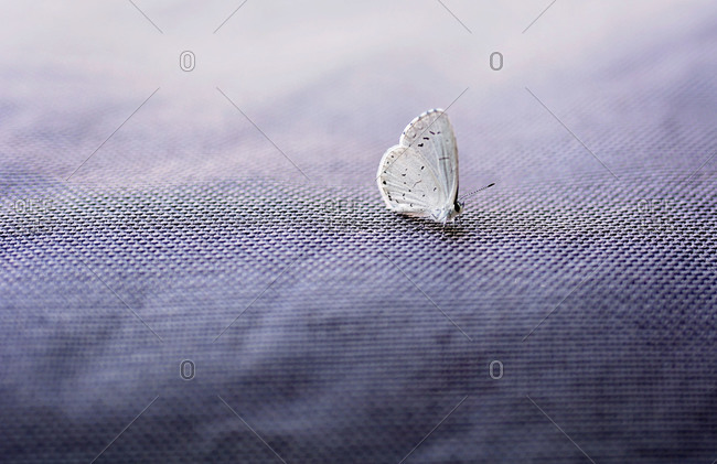 White butterfly on a textured surface