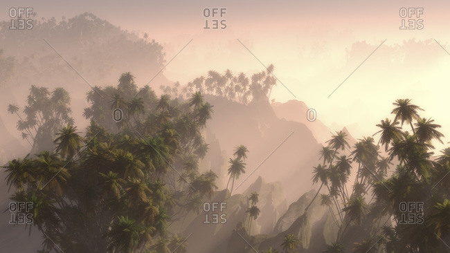 Palm tree forest at sunrise