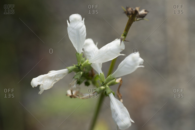 A white flowering plant