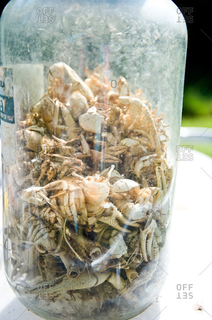 A jar filled with crayfish