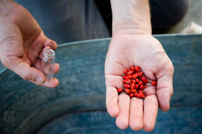 Acadian heritage seeds