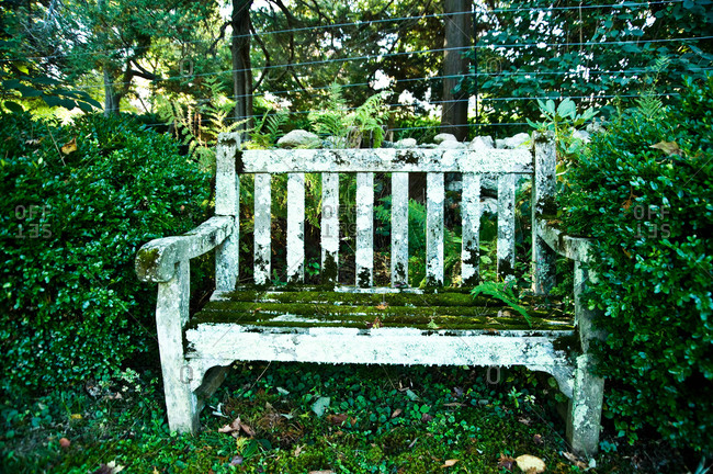 An old moss-covered bench in a garden