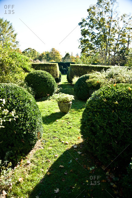North Salem, New York - October 9, 2010: Manicured shrubs in Page Dickey's yard