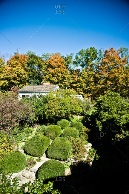 North Salem, New York - October 9, 2010: Page Dickey's hedge filled yard