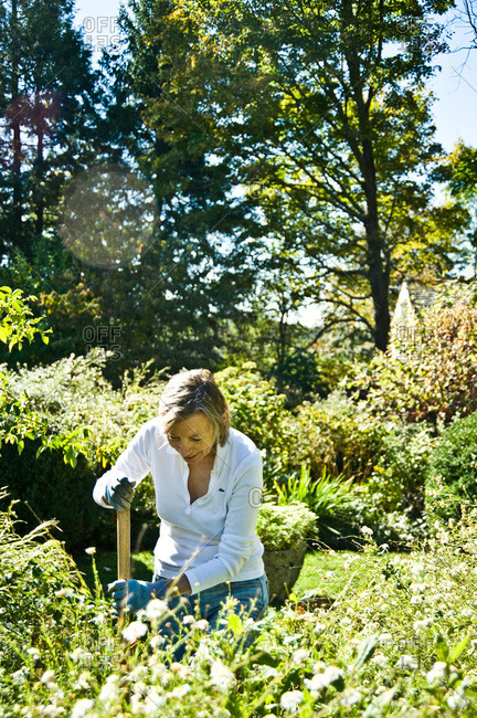 North Salem, New York - October 9, 2010: Page Dickey works in her garden