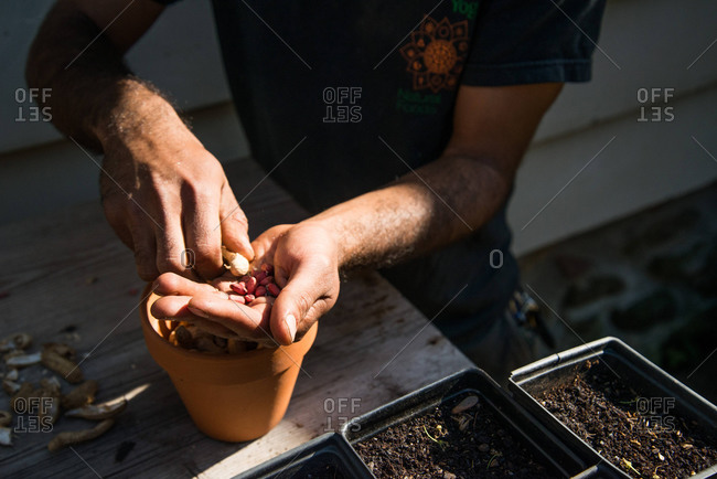 A man shells peanuts for their seeds