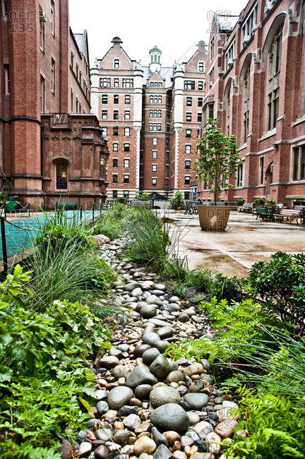 A rain garden