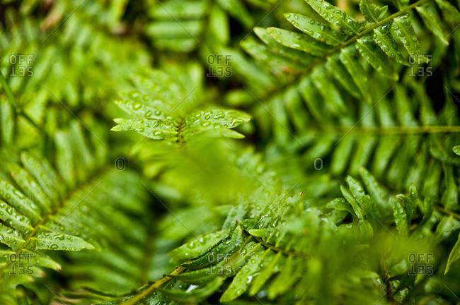 Close up of a fern leaf