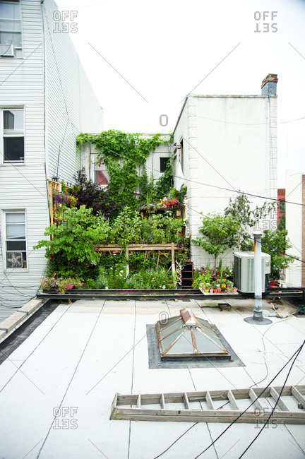 A small rooftop garden