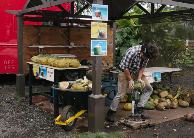 Hawaii - June 30, 2015: Man using tool to crack coconuts