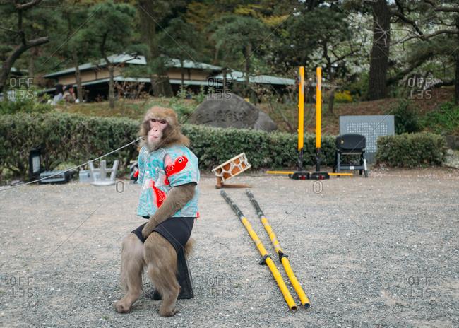 Yokohama, Japan - April 4, 2015: A monkey wearing a t-shirt in park