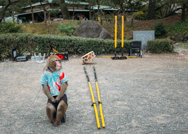 Yokohama, Japan - April 4, 2015:  A monkey wearing a t-shirt in nature center