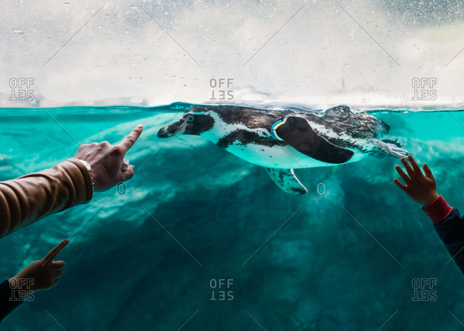 Kids pointing at a penguin swimming in water