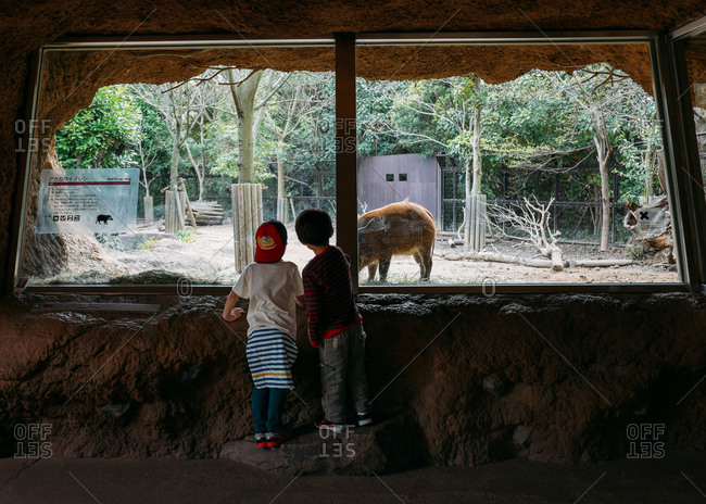 - July 7, 2015: Two kids watching animal in zoo window