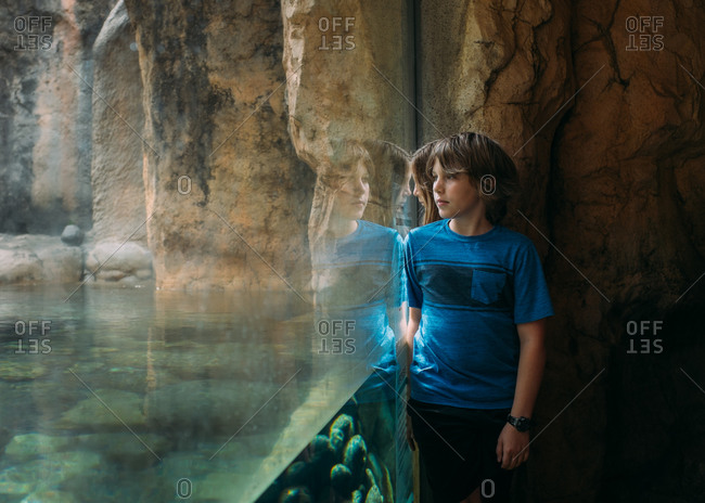 A boy looks into a penguin exhibit at a zoo