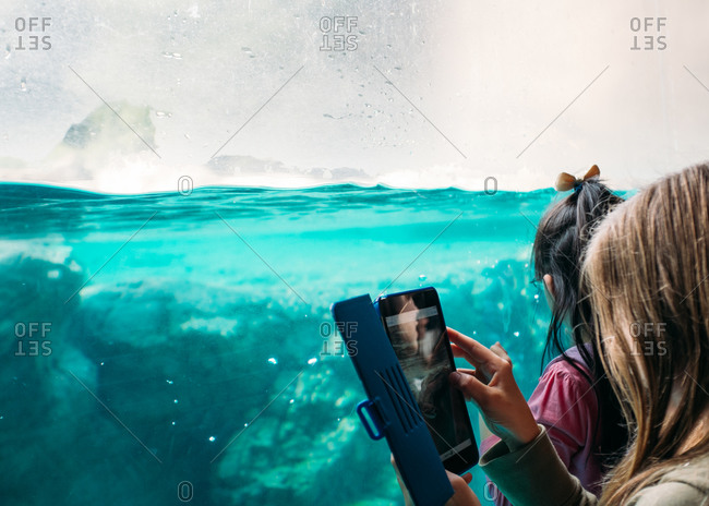 A girl takes a photograph of a penguin exhibit at a zoo