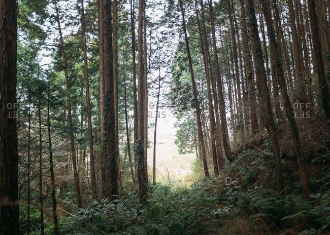Dense forest in Japan