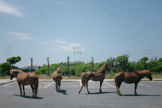 Horses standing in a parking lot