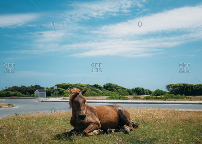 Free roaming horse lying in grass by road