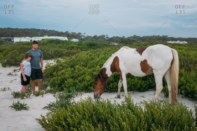 Man and boy watching horse graze on beach
