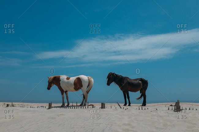 Two horses standing on a beach