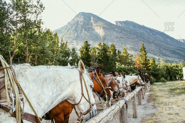 Horses tied to a hitching post
