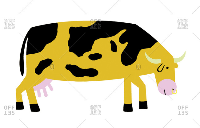 A cow with a nose ring