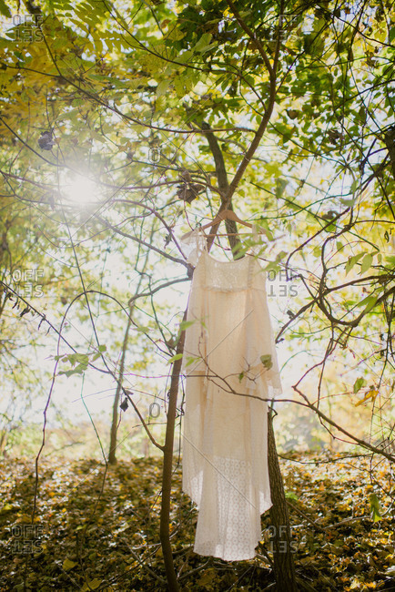 Wedding dress hanging from a tree branch