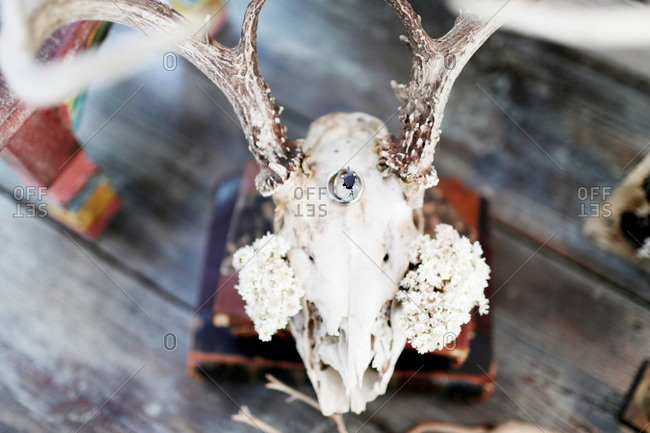 A wedding ring and flowers adorn a deer skull
