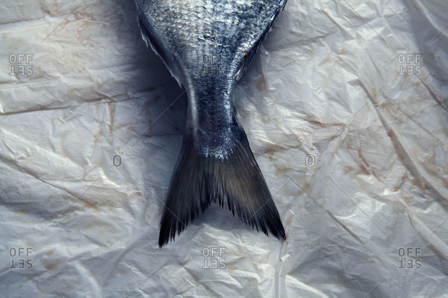 A fish tail on white paper