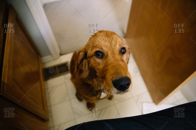 A wet dog looks up from the bathroom floor