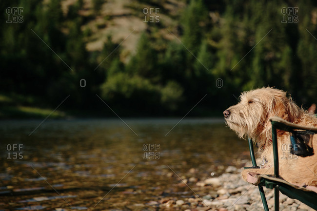 A dog sits in a camping chair at the river
