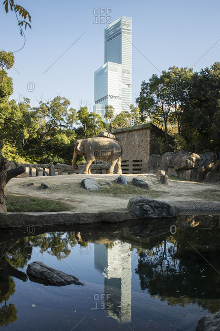 Japan - November 30, 2013: Building reflected in elephant habitat in Japanese zoo