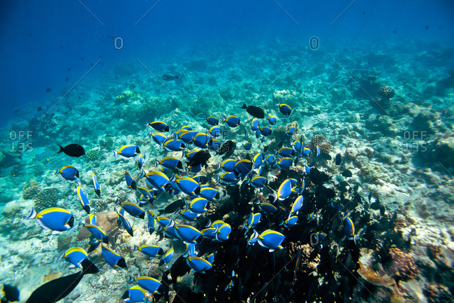 Tropical fish swim on the ocean floor