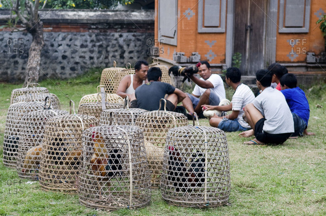Indonesia, Southeast Asia - July 13, 2015: A group of Indonesian men watching a cockfight