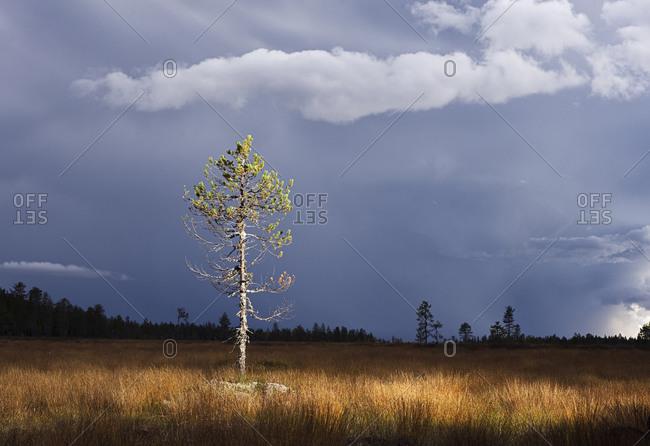 Tree on meadow under moody sky