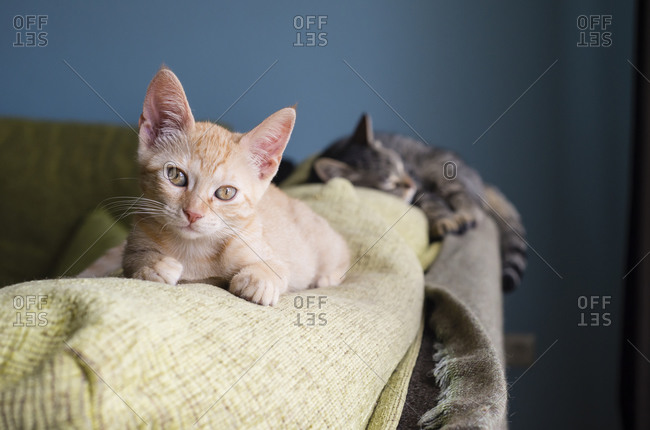 Two cats lying on backrest of a couch