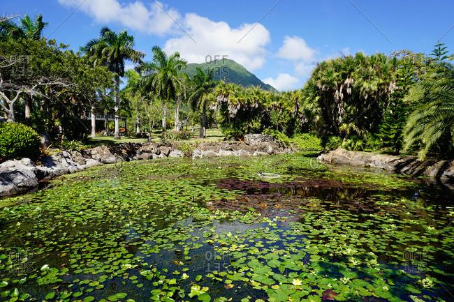 Nevis Botanical Garden, Nevis, St. Kitts and Nevis, Leeward Islands, West Indies, Caribbean, Central America