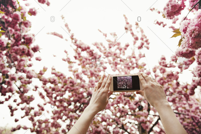 Woman taking picture of flowers on tree