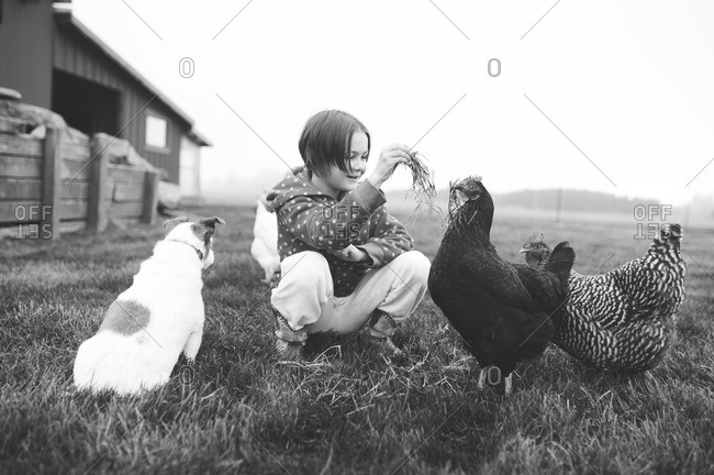 Young girl and dog in grass play with chickens