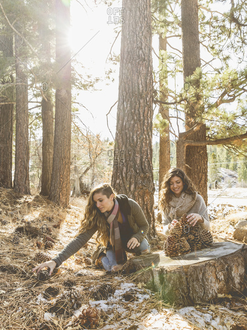 Two women collect giant pinecones in the woods