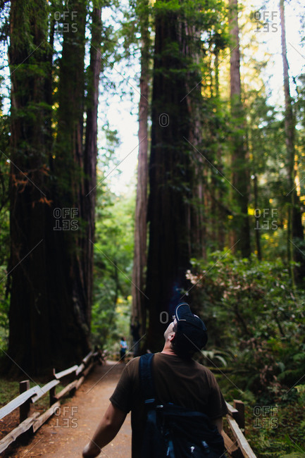 A man marvels at size of Redwoods in Muir Woods, California