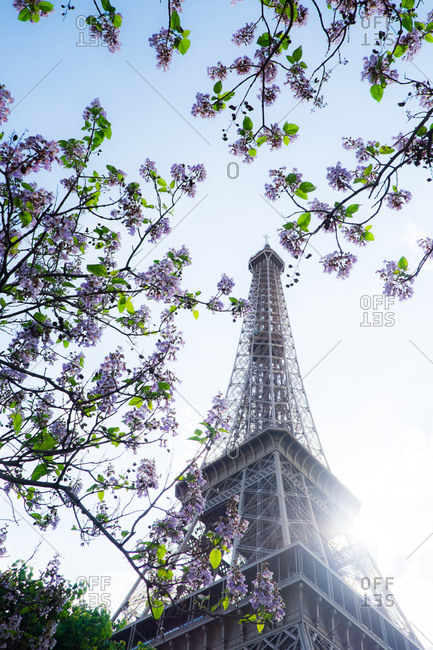 Eiffel Tower and flowers in the spring