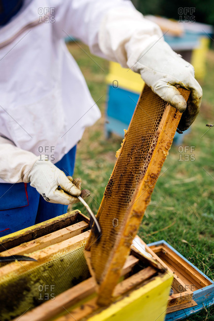 Beekeeper working in his apiary removing bees